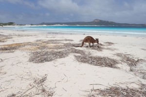 Idylka na Lucky Bay